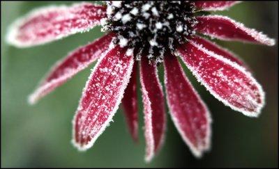 Conférence : préparer l'hiver au naturel